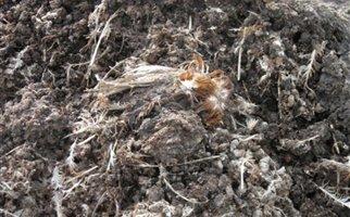 Σοκ: Απόβλητα πτηνοτροφείου στη λίμνη Μαραθώνα