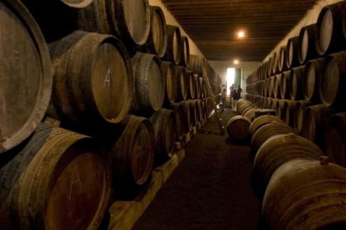 Έχυσε 60.000 λίτρα κρασιού Μπρουνέλο για εκδίκηση