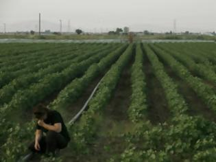 Προς ρύθμιση τα ενυπόθηκα «κόκκινα» δάνεια των αγροτών