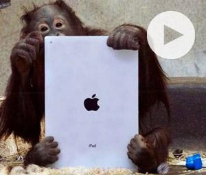 Ουρακοτάγκοι χρησιμοποιούν iPad!