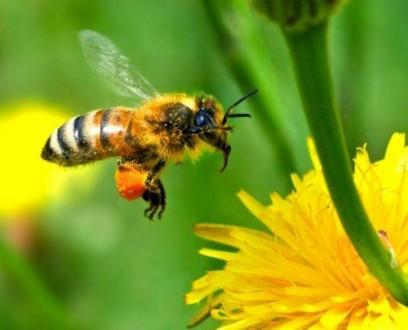 Μπλόκο από την Κομισιόν σε φυτοφάρμακα δολοφόνους μελισσών