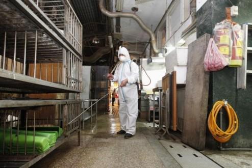 Η απολύμανση σταματά τη διάδοση του ιού H5N1