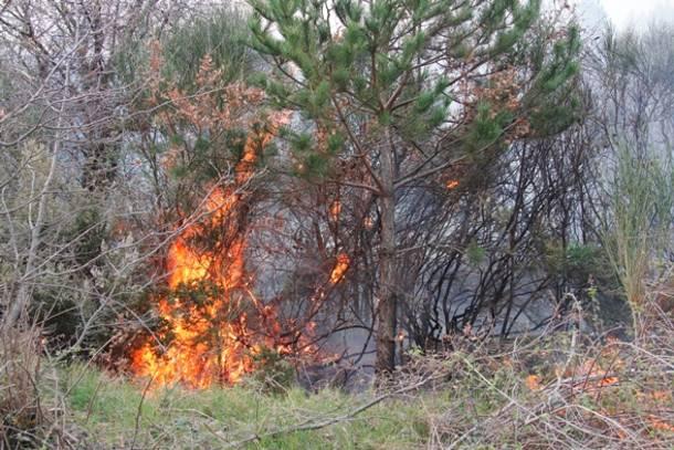 Σε εξέλιξη πυρκαγιά στη βόρεια Εύβοια