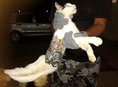Συνελήφθη γάτος που μετέφερε κινητά σε φυλακή