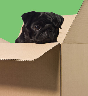 dogs-cardboard-dog-in-a-box