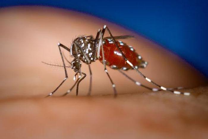 Ανησυχία για τον ιό του Δυτικού Νείλου