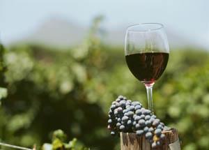 Τα Σκόπια απέσυραν τον όρο «Μακεδονία» από τα...κρασιά τους