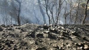 Περισσότερα από 42.000 στρέμματα έγιναν στάχτη στη Ρόδο