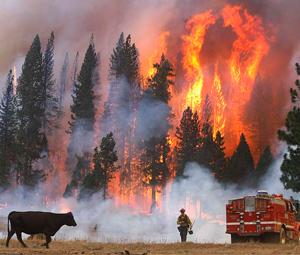 Παρανάλωμα πυρός το Πάρκο Γιοσέμιτι
