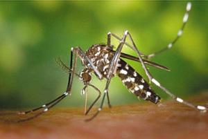 Το πρώτο θύμα από τον ιό του Δυτικού Νείλου