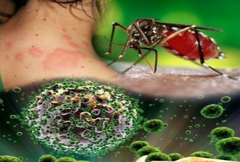 Οι επικίνδυνες περιοχές για τη μετάδοση του ιού του Δυτικού Νείλου