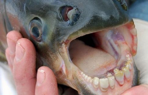 Ένα ψάρι που δαγκώνει ...όρχεις
