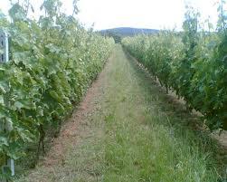 Κερδοφόρες αγροτικές καλλιέργειες