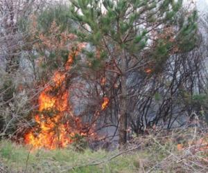 Υπό μερικό έλεγχο η φωτιά στα Τρίκαλα