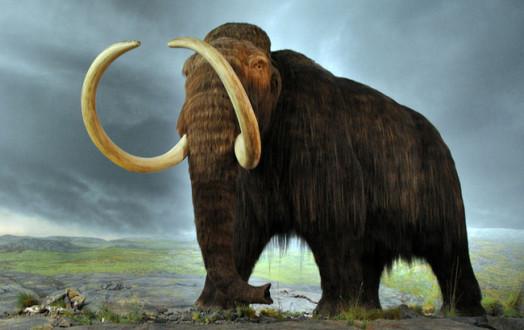 Η κλιματική αλλαγή έφταιξε για την εξαφάνιση των μαμούθ