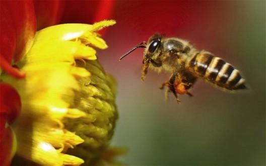 Οι εξατμίσεις κάνουν ...άοσμα τα λουλούδια για τις μέλισσες