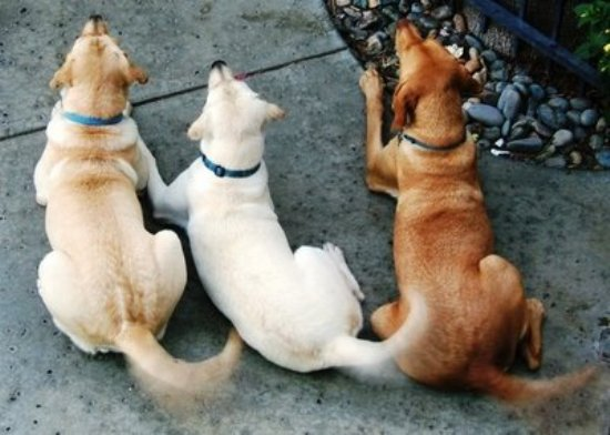 Τι θέλει να πει ο σκύλος όταν κουνάει την ουρά του