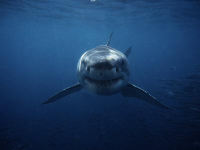 Τριακόσιοι καρχαρίες έχουν... twitter