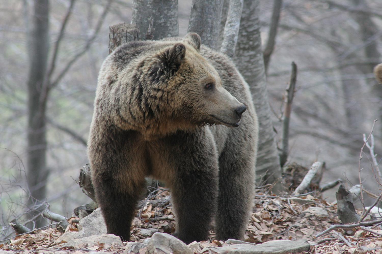 Το ξύπνημα των αρκούδων φέρνει πρόωρη άνοιξη