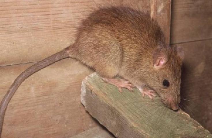 Γεμάτη ποντίκια η Βουλή