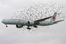 Αναγκαστική προσγείωση αεροσκάφους εξαιτίας...πουλιών!
