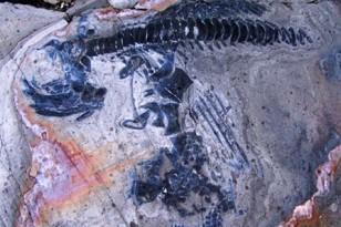 ichthyosaur1