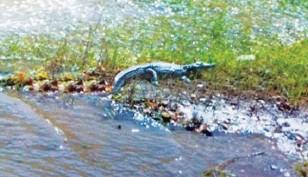 krokodeilos kriti