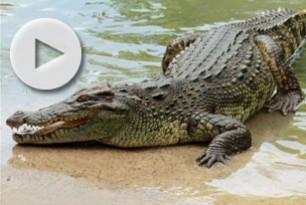 kriti-krokodeilos