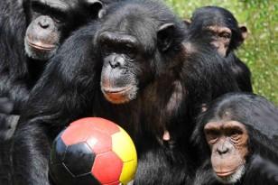 chimba1