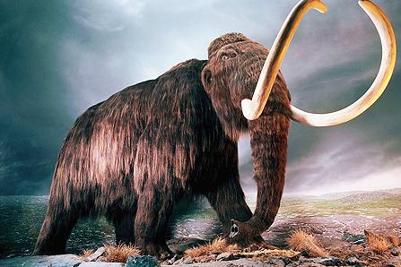 mammoth11