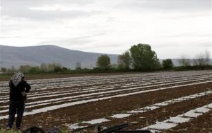 agrotes-agrotika-kalliergeies