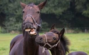 Horse-Faces_b2