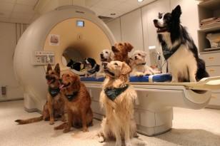 Σκύλοι+σε+μηχάνημα+εγκεφαλικής+απεικόνισης+fMRI+Πηγή+Enik+Kubinyi