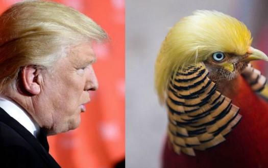 trumpbird1