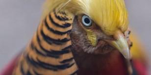 trumpbird3