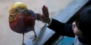 trumpbird4