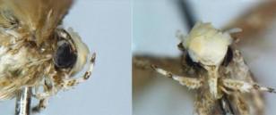 entomo-donald