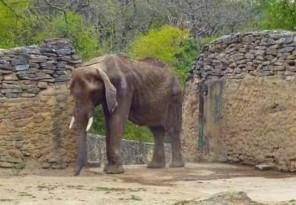 elefantasvenezouela