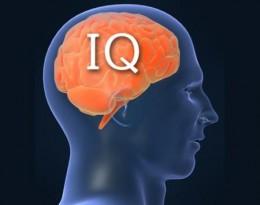 IQ_SPOTLIGHT