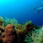 koralia