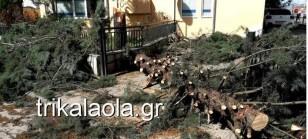 trikala_anemoi708 (1)