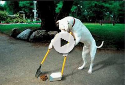 Ανακαλύψτε πόσο έξυπνος είναι ο σκύλος σας